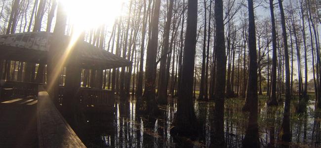 Foley, Alabama, parks, Cedar Street, nature