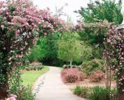 wilbourne antique rose trail
